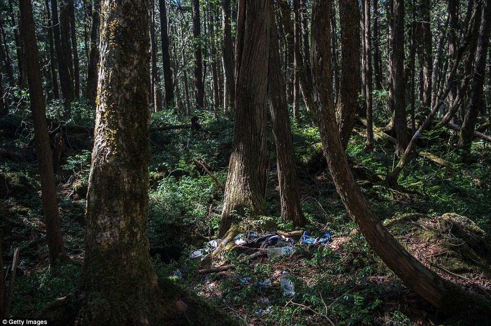 Những bức hình ám ảnh trong khu rừng tự sát: Tỷ lệ tự tử đã giảm ở Nhật nhưng ký ức đau thương vẫn đầy nơi này - Ảnh 7.