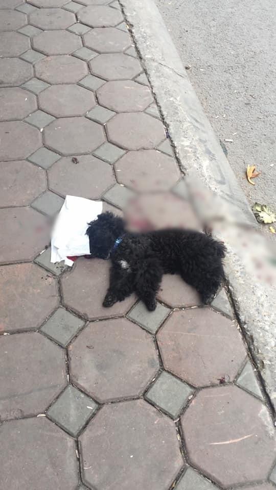 Để chó Poodle chạy rông ra ngoài đường bị ô tô cán chết, nam thanh niên nhất quyết đuổi theo yêu cầu lái xe dừng lại nói chuyện gây tranh cãi - Ảnh 2.