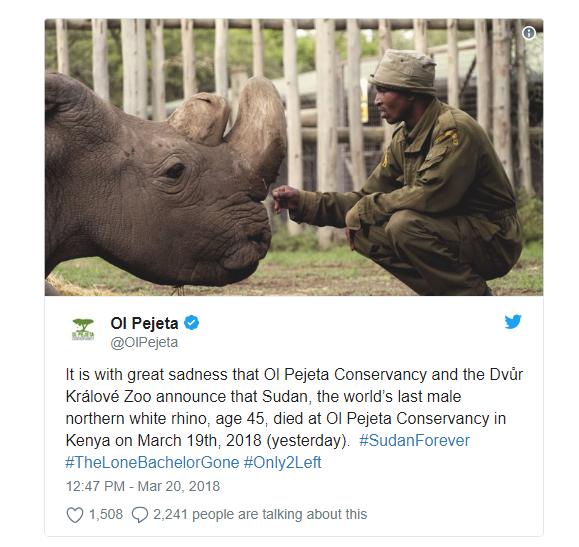 Chú tê giác trắng đực Bắc Phi cuối cùng trên thế giới qua đời - niềm hy vọng mong manh cuối cùng bị dập tắt - Ảnh 2.