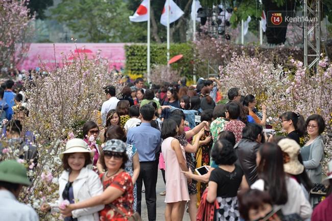 Hàng ngàn người dân Hà Nội chen chúc trong buổi sáng đầu tiên mở cửa Lễ hội hoa anh đào - Ảnh 1.