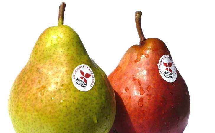 Ăn nhiều là thế nhưng bạn biết vì sao trên vỏ quả táo hay lê hay xuất hiện những chấm nhỏ li ti không? - Ảnh 3.