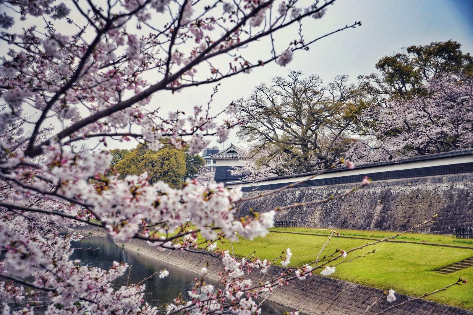 Ghé thăm Kumamoto - một trong Tam đại Quốc bảo thành định hình lịch sử của Nhật Bản - Ảnh 3.