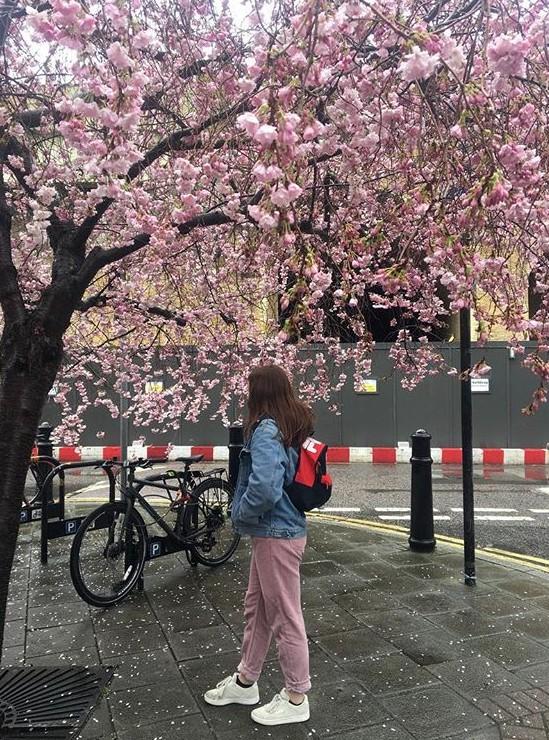 Lướt Instagram từ Âu đến Á là biết mùa hoa anh đào tuyệt đẹp đã thực sự đến rồi! - Ảnh 29.