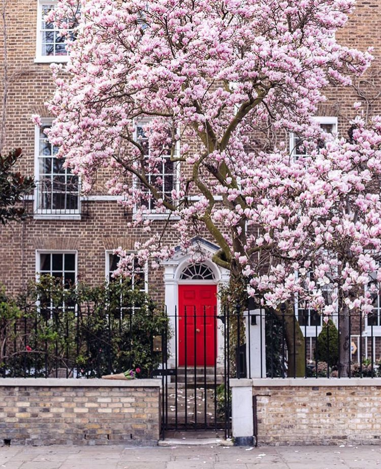 Lướt Instagram từ Âu đến Á là biết mùa hoa anh đào tuyệt đẹp đã thực sự đến rồi! - Ảnh 30.