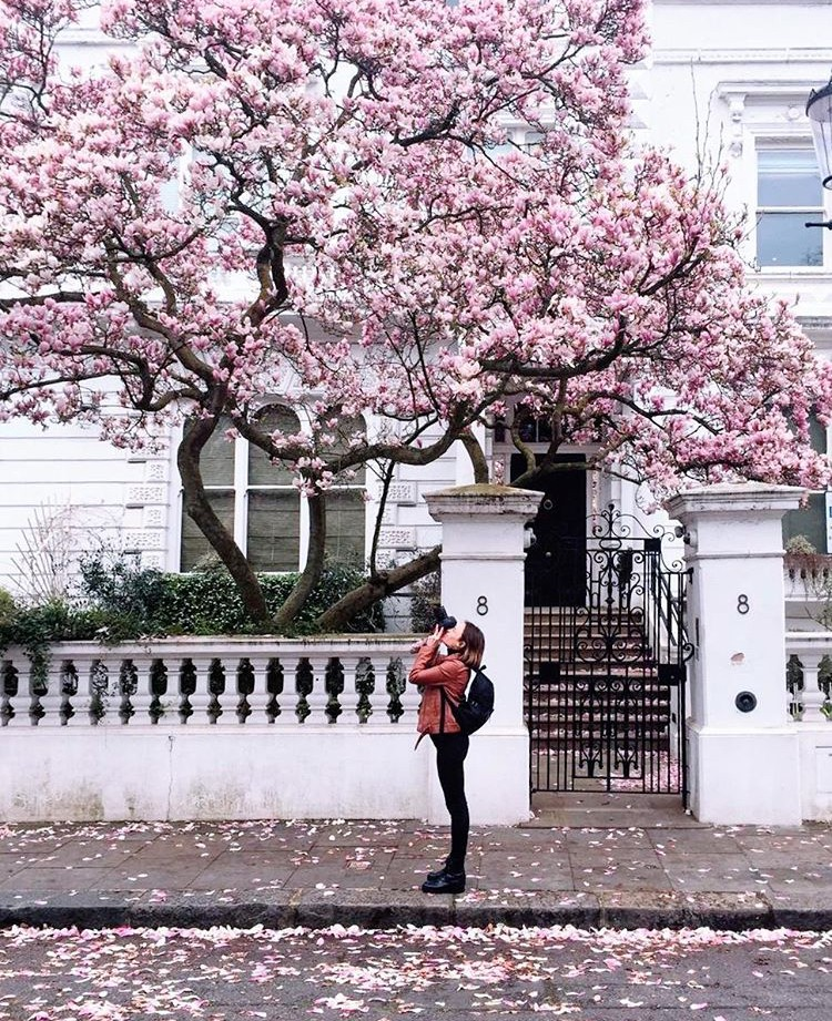 Lướt Instagram từ Âu đến Á là biết mùa hoa anh đào tuyệt đẹp đã thực sự đến rồi! - Ảnh 28.
