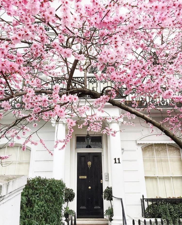 Lướt Instagram từ Âu đến Á là biết mùa hoa anh đào tuyệt đẹp đã thực sự đến rồi! - Ảnh 31.