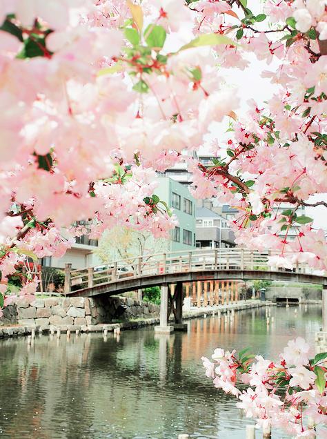 Lướt Instagram từ Âu đến Á là biết mùa hoa anh đào tuyệt đẹp đã thực sự đến rồi! - Ảnh 21.