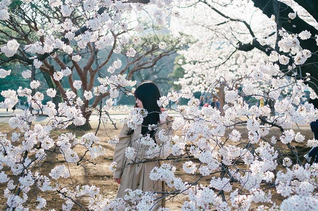 Lướt Instagram từ Âu đến Á là biết mùa hoa anh đào tuyệt đẹp đã thực sự đến rồi! - Ảnh 9.