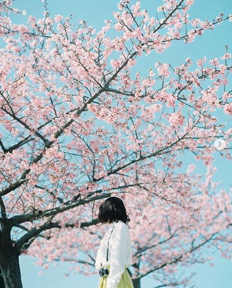 Lướt Instagram từ Âu đến Á là biết mùa hoa anh đào tuyệt đẹp đã thực sự đến rồi! - Ảnh 5.