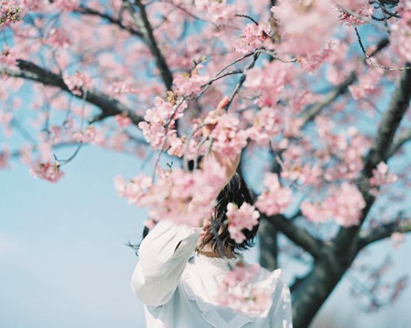 Lướt Instagram từ Âu đến Á là biết mùa hoa anh đào tuyệt đẹp đã thực sự đến rồi! - Ảnh 12.