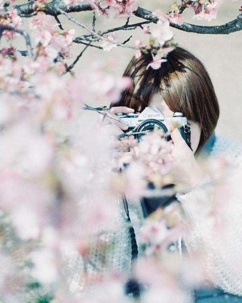 Lướt Instagram từ Âu đến Á là biết mùa hoa anh đào tuyệt đẹp đã thực sự đến rồi! - Ảnh 13.