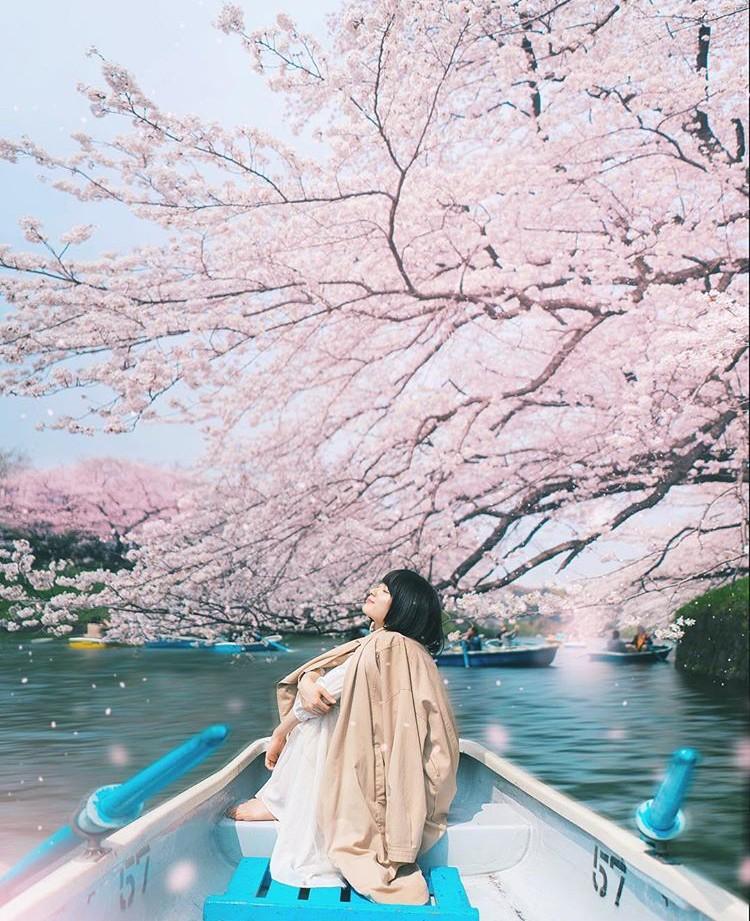 Lướt Instagram từ Âu đến Á là biết mùa hoa anh đào tuyệt đẹp đã thực sự đến rồi! - Ảnh 1.