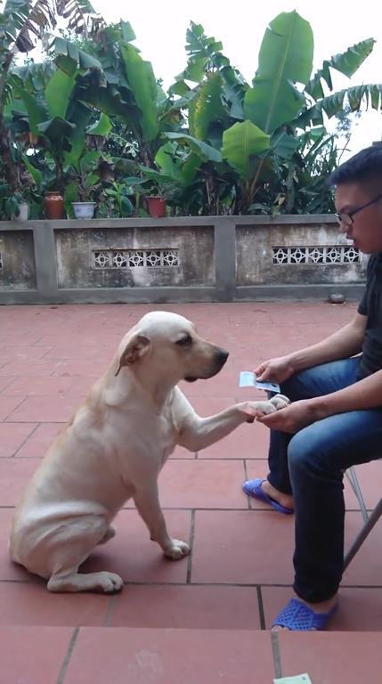 Chú chó thông minh nhất Vịnh Bắc Bộ: Cho 200k không lấy cứ đòi lấy tờ 500k - Ảnh 2.