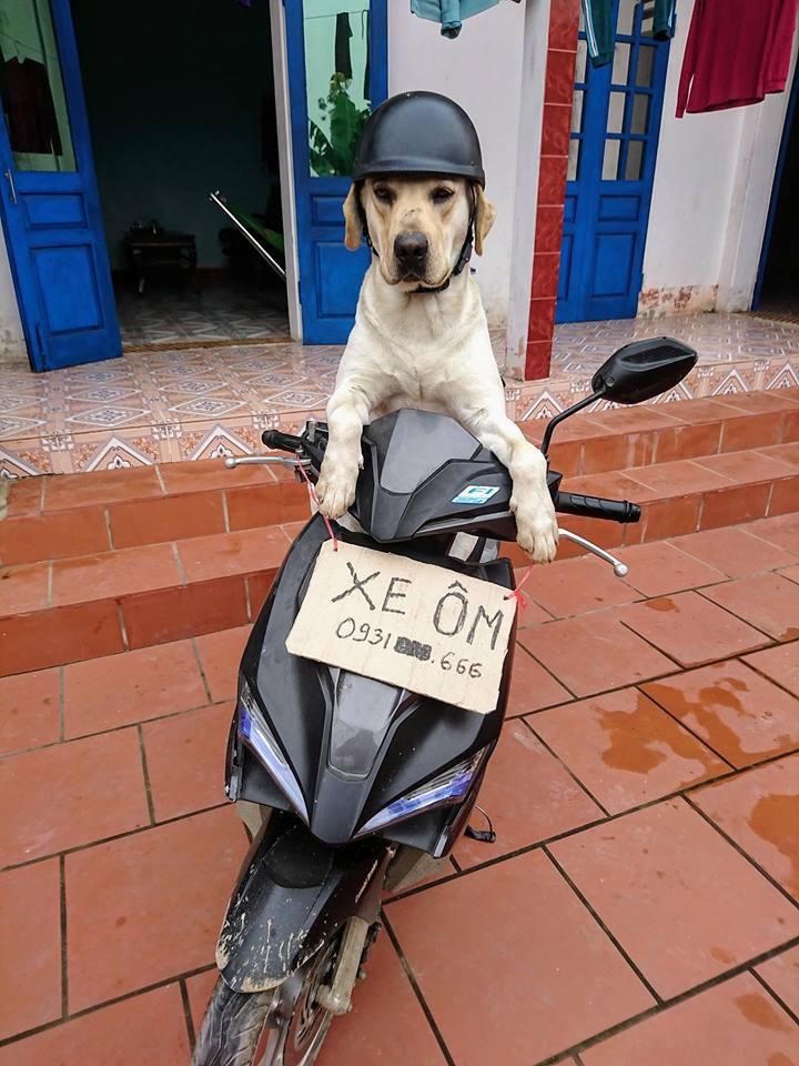 Chú chó thông minh nhất Vịnh Bắc Bộ: Cho 200k không lấy cứ đòi lấy tờ 500k - Ảnh 6.