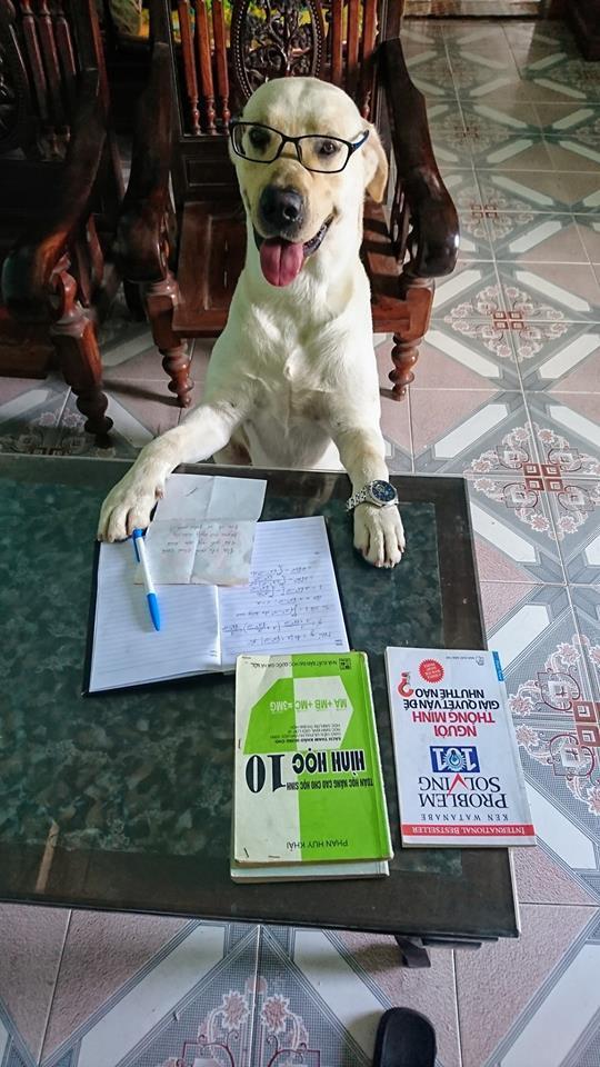 Chú chó thông minh nhất Vịnh Bắc Bộ: Cho 200k không lấy cứ đòi lấy tờ 500k - Ảnh 7.