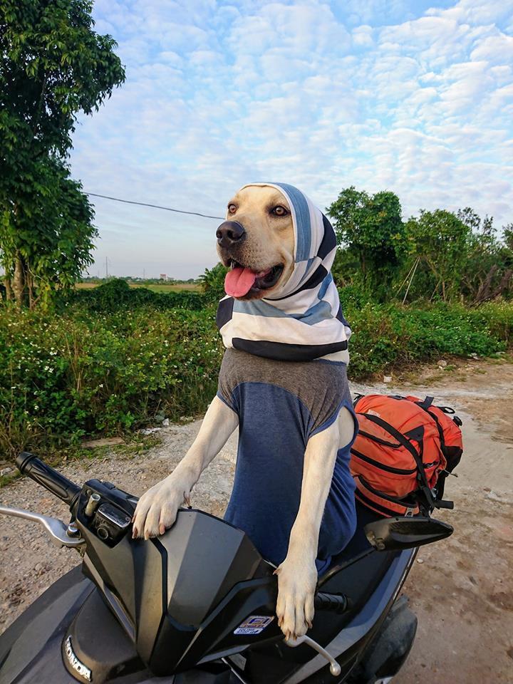 Chú chó thông minh nhất Vịnh Bắc Bộ: Cho 200k không lấy cứ đòi lấy tờ 500k - Ảnh 8.