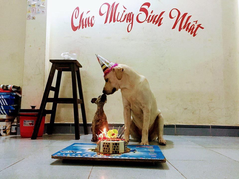 Chú chó thông minh nhất Vịnh Bắc Bộ: Cho 200k không lấy cứ đòi lấy tờ 500k - Ảnh 9.