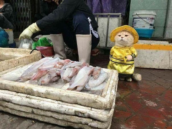 Hết bán cá lại trông phản thịt, chú mèo nổi tiếng khắp chợ Hải Phòng lên trang nhất tạp chí nước ngoài - Ảnh 1.