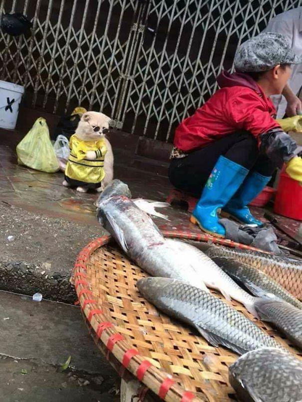 Hết bán cá lại trông phản thịt, chú mèo nổi tiếng khắp chợ Hải Phòng lên trang nhất tạp chí nước ngoài - Ảnh 4.