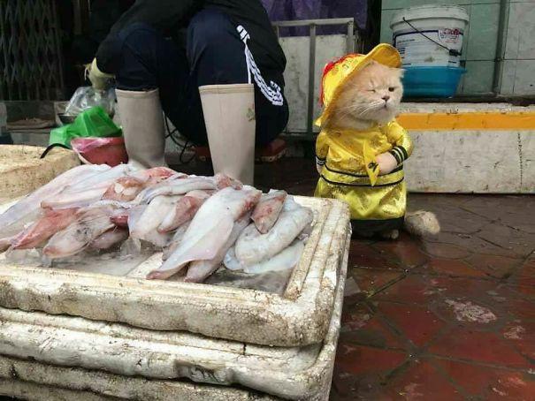 Hết bán cá lại trông phản thịt, chú mèo nổi tiếng khắp chợ Hải Phòng lên trang nhất tạp chí nước ngoài - Ảnh 5.