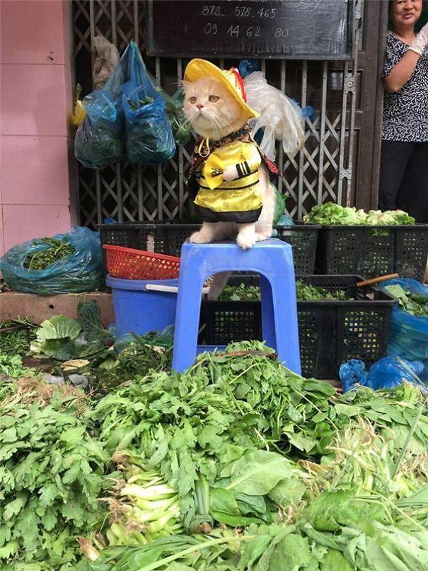 Hết bán cá lại trông phản thịt, chú mèo nổi tiếng khắp chợ Hải Phòng lên trang nhất tạp chí nước ngoài - Ảnh 9.
