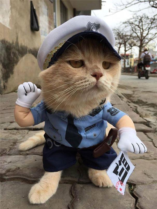 Hết bán cá lại trông phản thịt, chú mèo nổi tiếng khắp chợ Hải Phòng lên trang nhất tạp chí nước ngoài - Ảnh 12.
