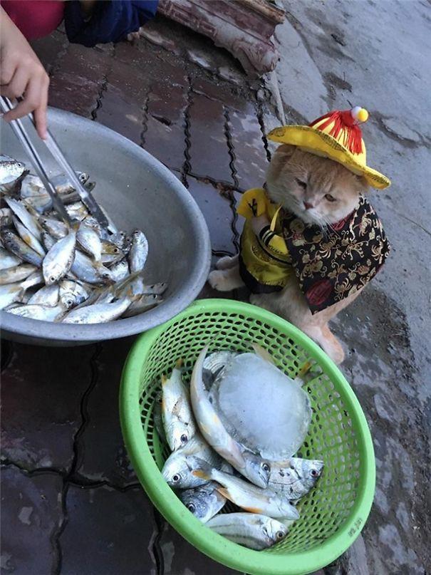 Hết bán cá lại trông phản thịt, chú mèo nổi tiếng khắp chợ Hải Phòng lên trang nhất tạp chí nước ngoài - Ảnh 17.