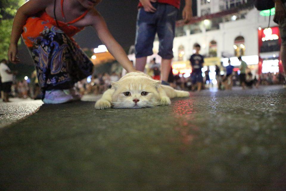 Hết bán cá lại trông phản thịt, chú mèo nổi tiếng khắp chợ Hải Phòng lên trang nhất tạp chí nước ngoài - Ảnh 14.