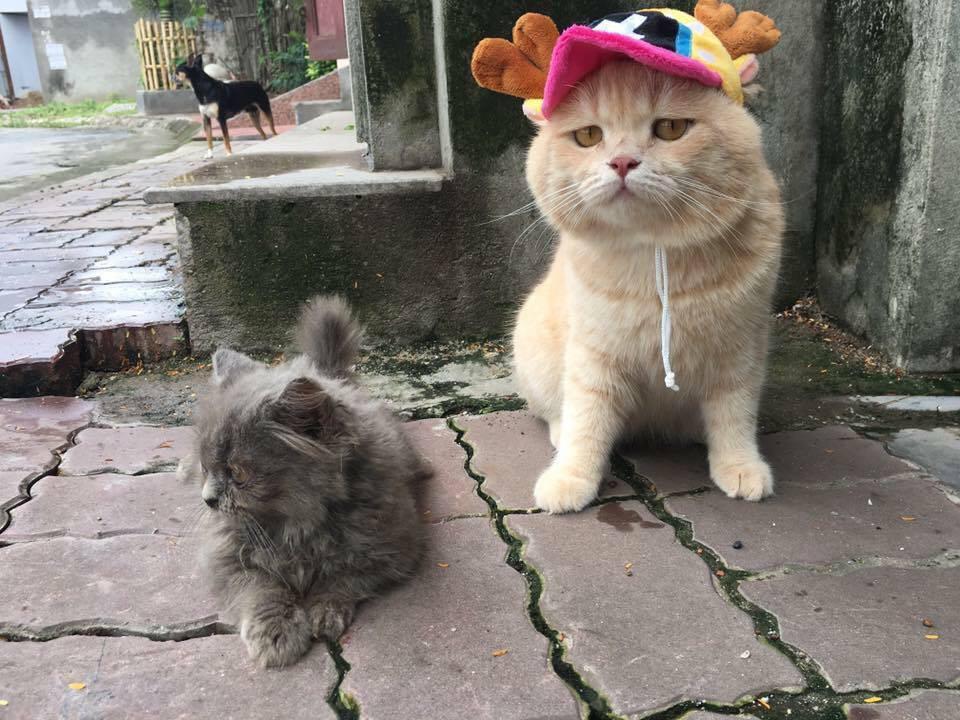 Hết bán cá lại trông phản thịt, chú mèo nổi tiếng khắp chợ Hải Phòng lên trang nhất tạp chí nước ngoài - Ảnh 15.
