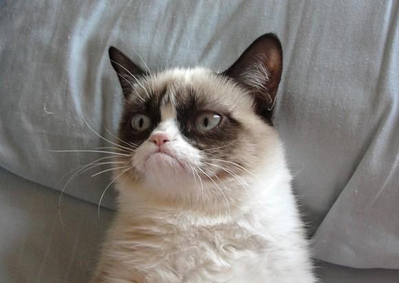 Những chú mèo nổi tiếng làm 'khuynh đảo' mạng xã hội, xuất hiện ở đâu là có ngay chục nghìn lượt thích!
