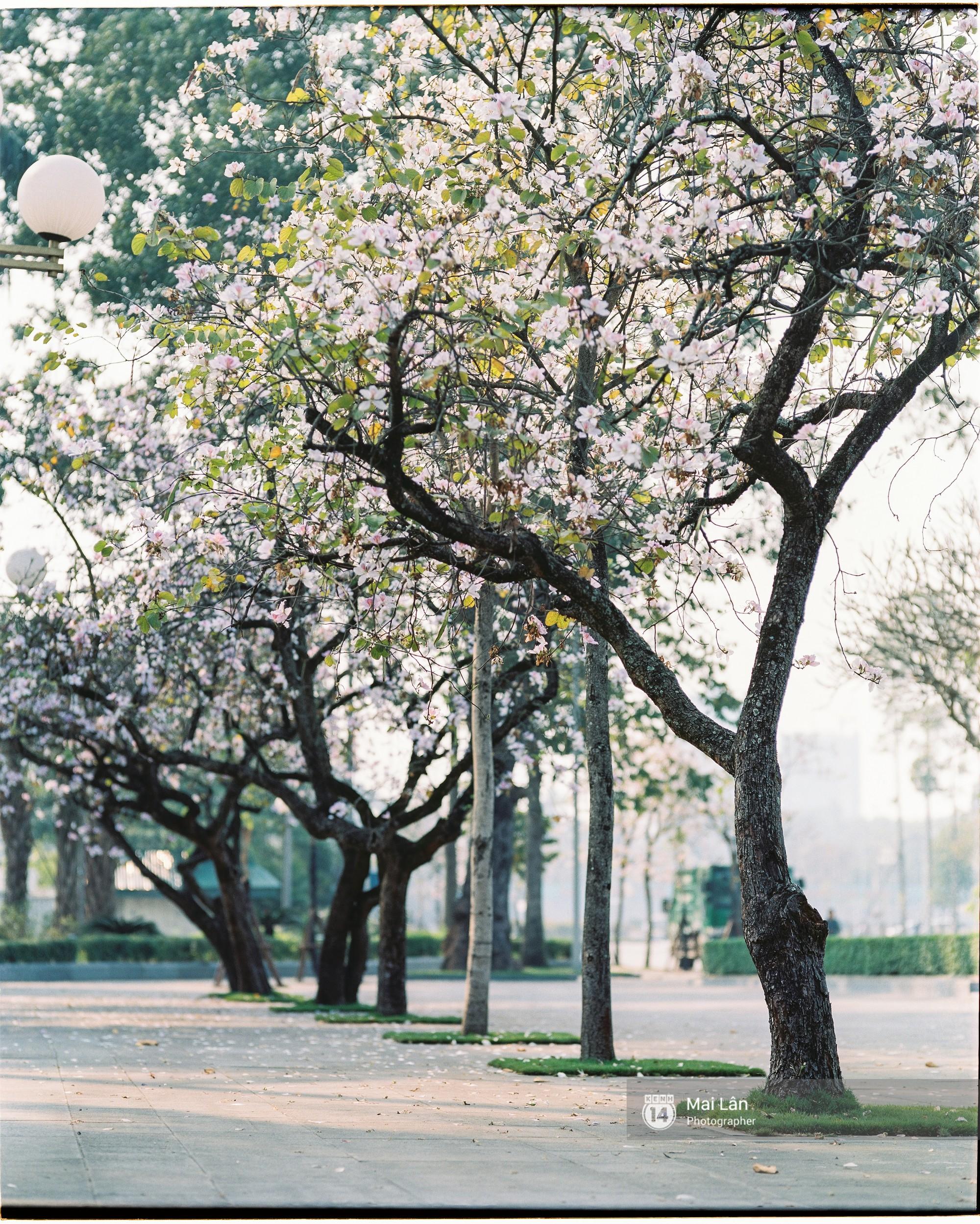 Chùm ảnh: Đây là Hà Nội, của những ngày trắng muốt hoa sưa... - Ảnh 9.