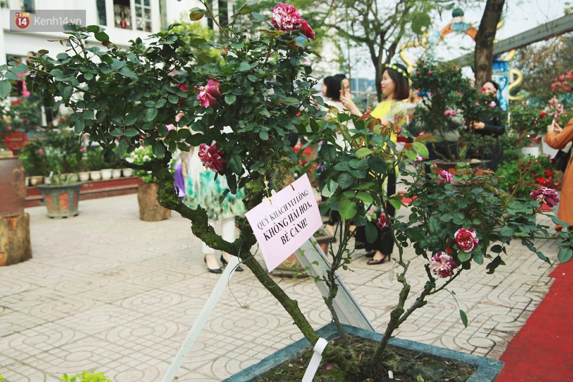 Lễ hội hoa hồng Bulgaria khoe sắc với gần 2.000 giống hoa đúng dịp Quốc tế phụ nữ 8/3 - Ảnh 7.