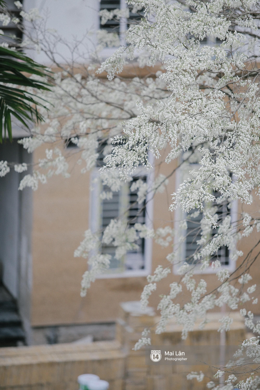 Chùm ảnh: Đây là Hà Nội, của những ngày trắng muốt hoa sưa... - Ảnh 5.