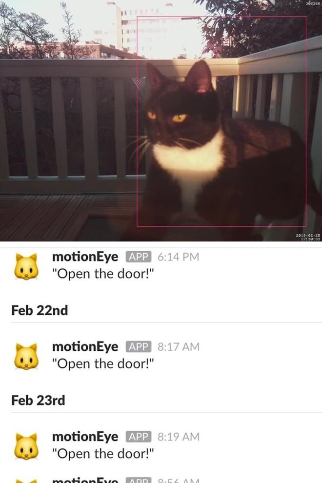 Camera nhận diện mặt mèo, giúp nó nhắn tin cho ông chủ mỗi khi muốn vào nhà - Ảnh 1.