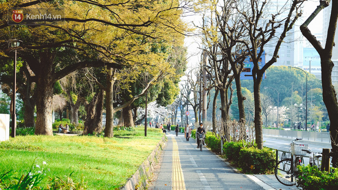 Mùa hoa anh đào ở Nhật Bản, cứ bước ra đường là góc nào cũng đẹp! - Ảnh 5.