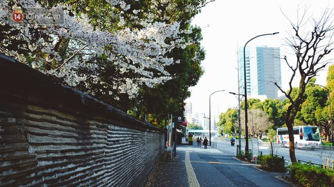 Mùa hoa anh đào ở Nhật Bản, cứ bước ra đường là góc nào cũng đẹp! - Ảnh 13.