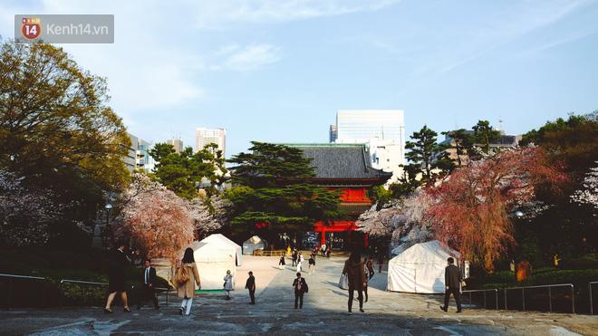 Mùa hoa anh đào ở Nhật Bản, cứ bước ra đường là góc nào cũng đẹp! - Ảnh 2.