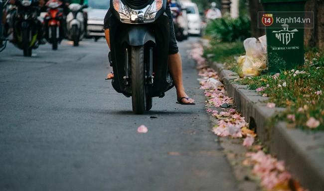 Sài Gòn trong mùa hoa kèn hồng nở rộ, khắp phố phường như đang vào xuân - Ảnh 9.