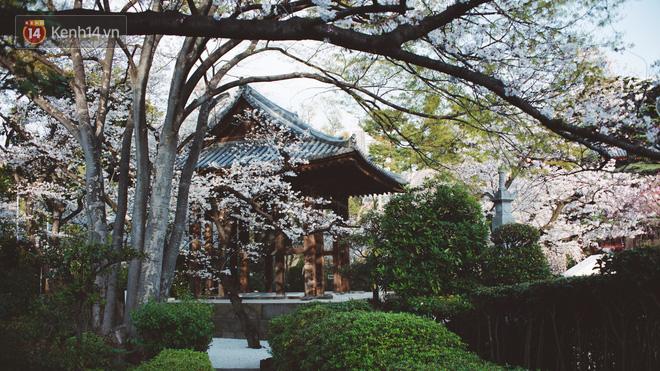 Mùa hoa anh đào ở Nhật Bản, cứ bước ra đường là góc nào cũng đẹp! - Ảnh 4.