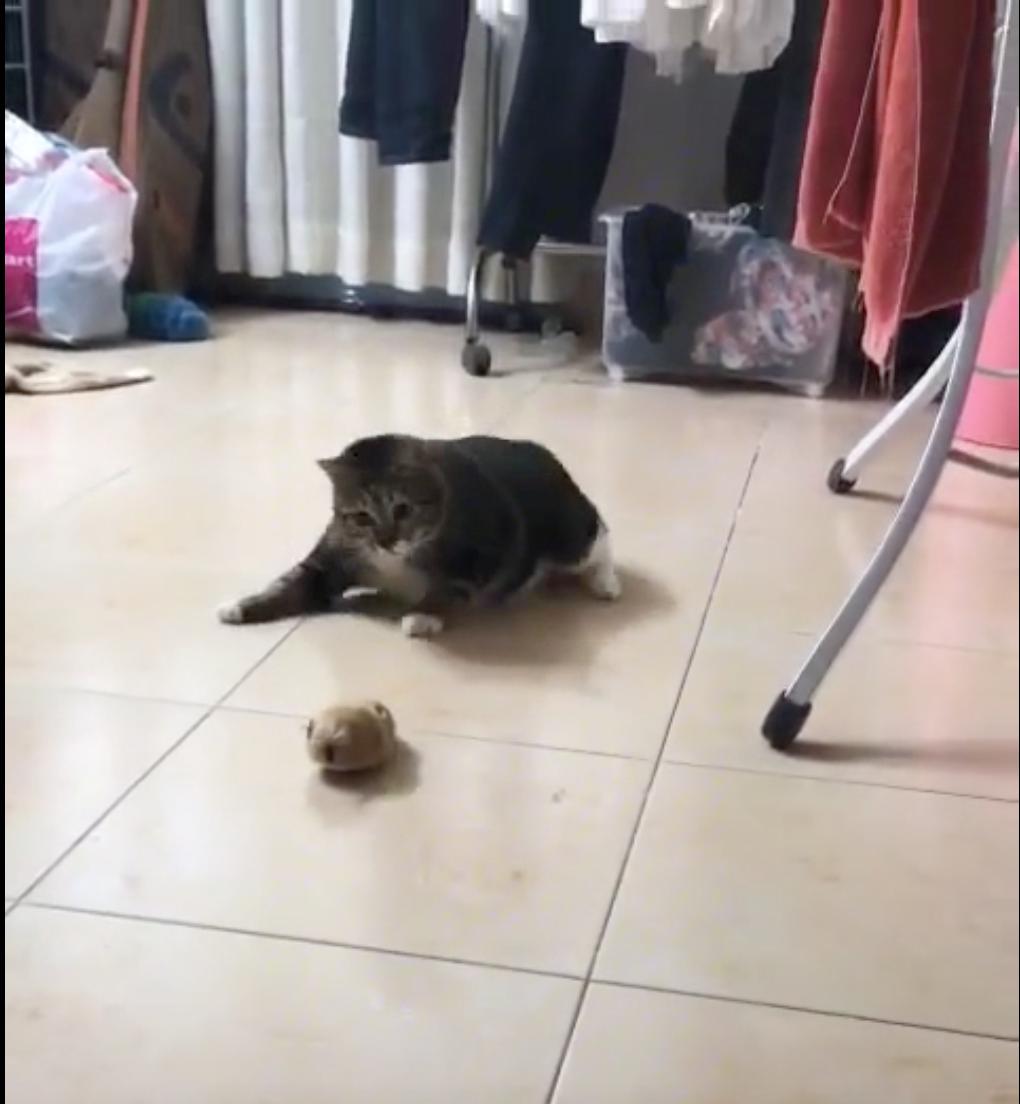 Clip buồn: Con mèo không sợ trời, không sợ đất, chỉ sợ mỗi chuột - Ảnh 2.