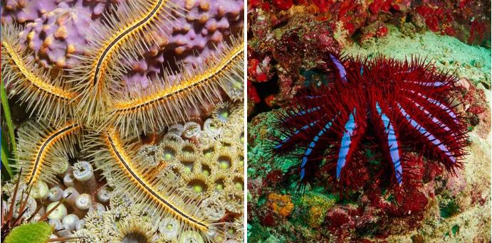 Sở hữu nghìn mắt nhưng lại không có não - đây thực sự là con quái vật kinh khủng nhất đại dương - Ảnh 4.