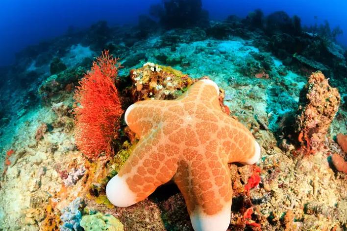Sở hữu nghìn mắt nhưng lại không có não - đây thực sự là con quái vật kinh khủng nhất đại dương - Ảnh 5.