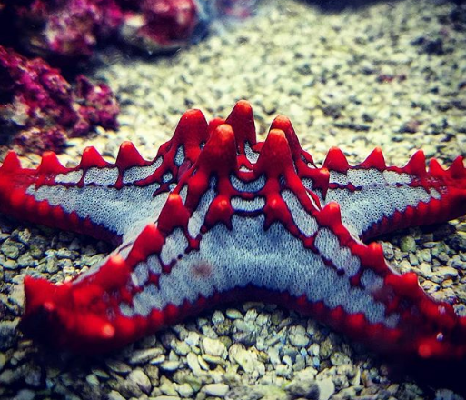 Sở hữu nghìn mắt nhưng lại không có não - đây thực sự là con quái vật kinh khủng nhất đại dương - Ảnh 9.