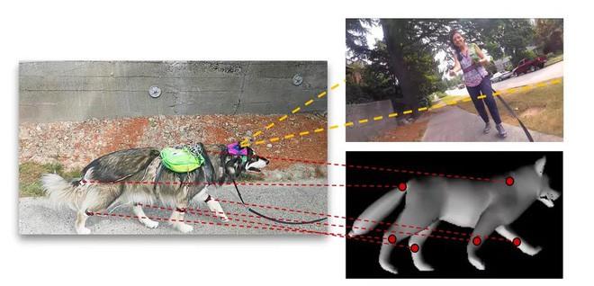 Các nhà nghiên cứu dạy AI cách suy nghĩ như một chú chó, biết tìm hiểu thế giới xung quanh - Ảnh 2.