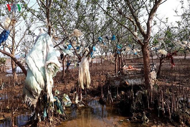 Ảnh: Kinh hoàng rừng cây treo đầy rác ở Thanh Hoá - Ảnh 2.
