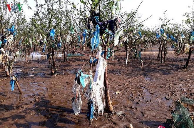 Ảnh: Kinh hoàng rừng cây treo đầy rác ở Thanh Hoá - Ảnh 10.