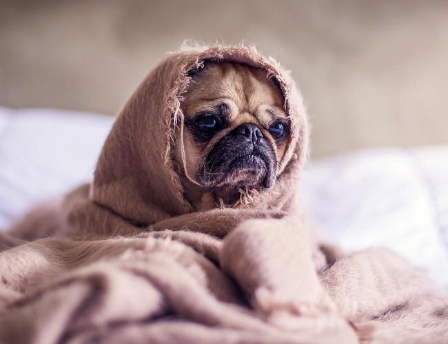 Những sự thật lợi bất cập hại về thói quen ngủ nude tất cả chúng ta đều cần biết trước khi thử - Ảnh 9.