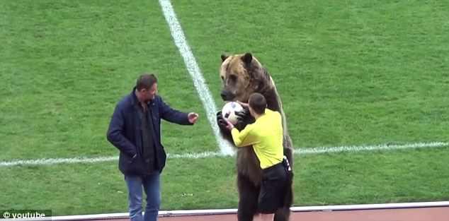 SỐC: Chú gấu to gấp rưỡi người thường vào sân đưa bóng cho trọng tài - Ảnh 2.
