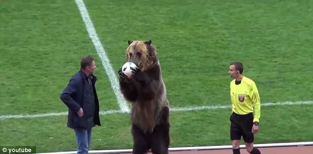 SỐC: Chú gấu to gấp rưỡi người thường vào sân đưa bóng cho trọng tài - Ảnh 3.