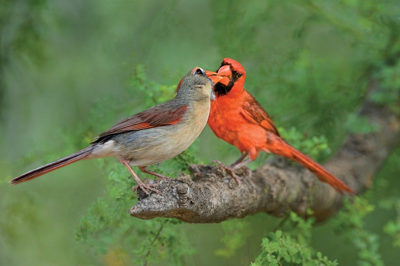 Tiết lộ thú vị từ khoa học: Loài chim cũng sở hữu hormone tình yêu giống con người - Ảnh 2.